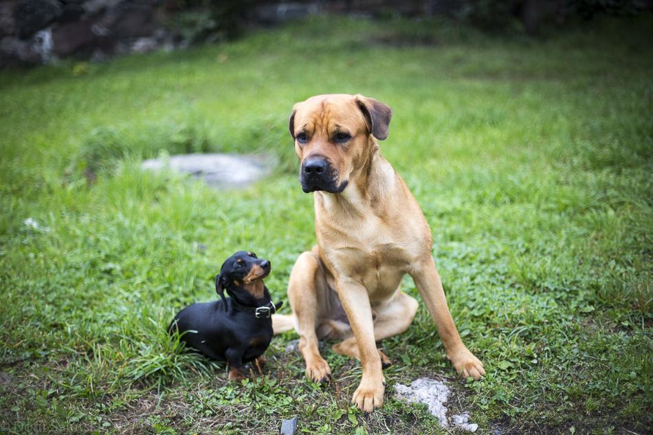 doritsalutskij-koira