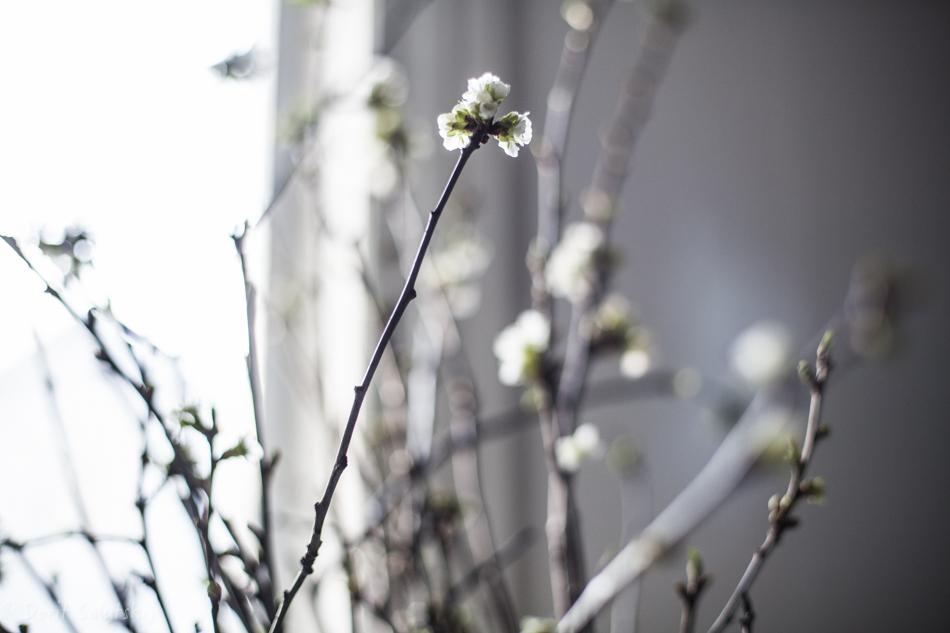 doritsalutskij.fi-kirsikankukat-5