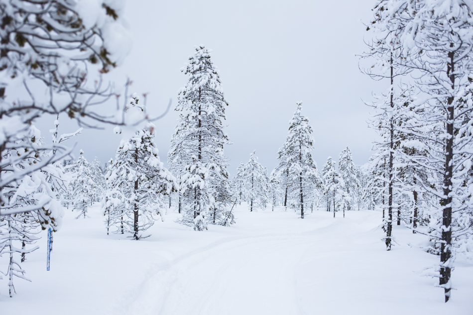 doritsalutskij.fi-lunta-8